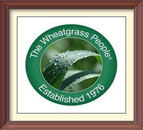 Pines Wheatgrass